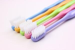 歯の仕組み 組織