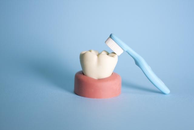 歯垢 除去